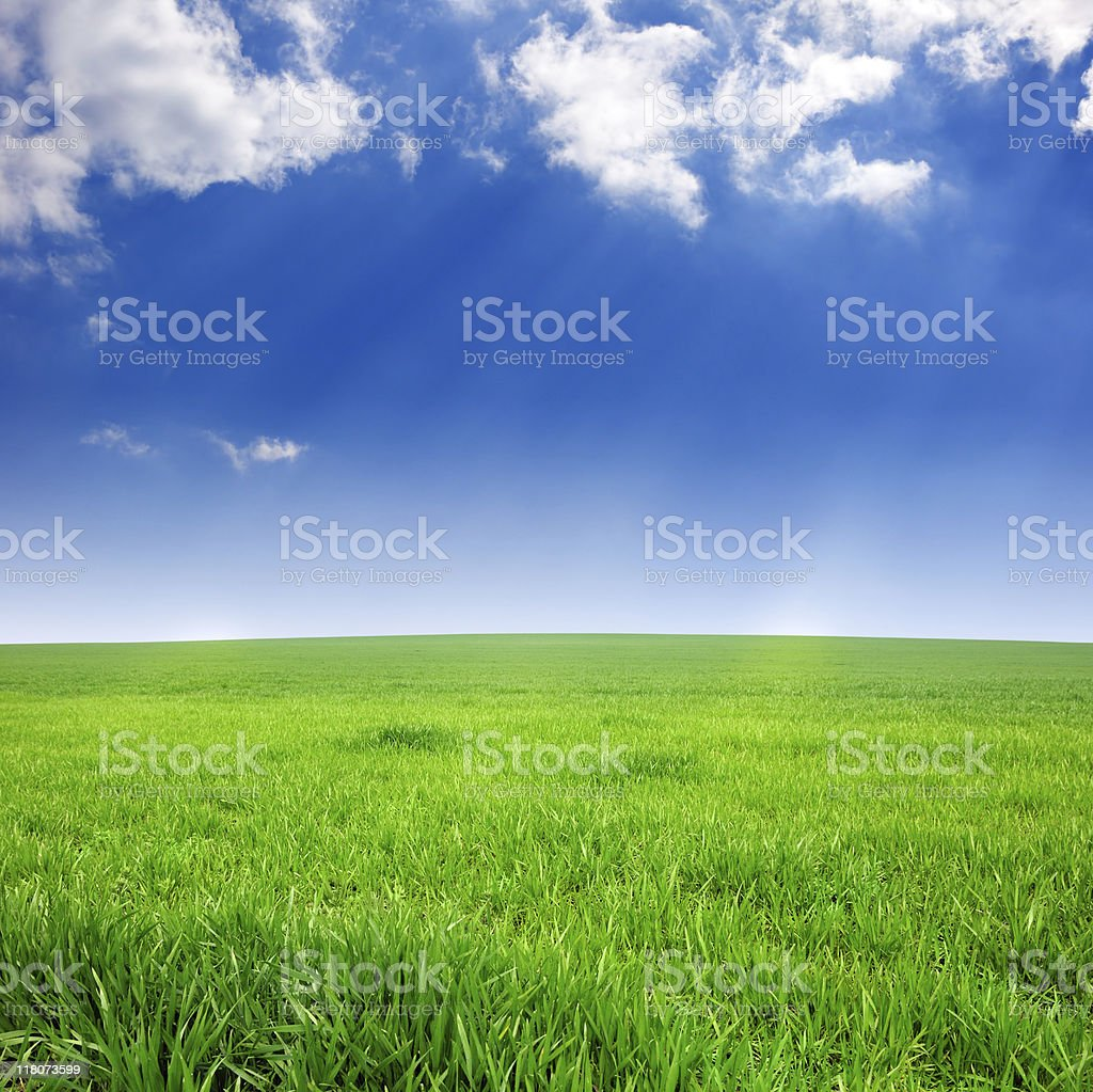 Grass in sunlight royalty-free stock photo
