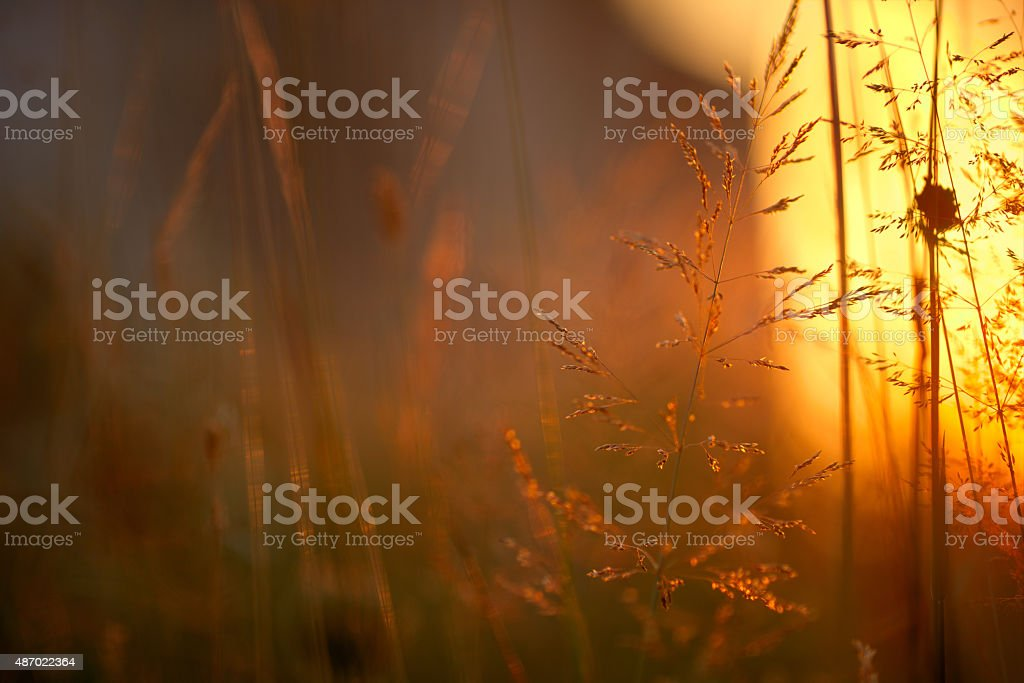 grass in sunlight stock photo