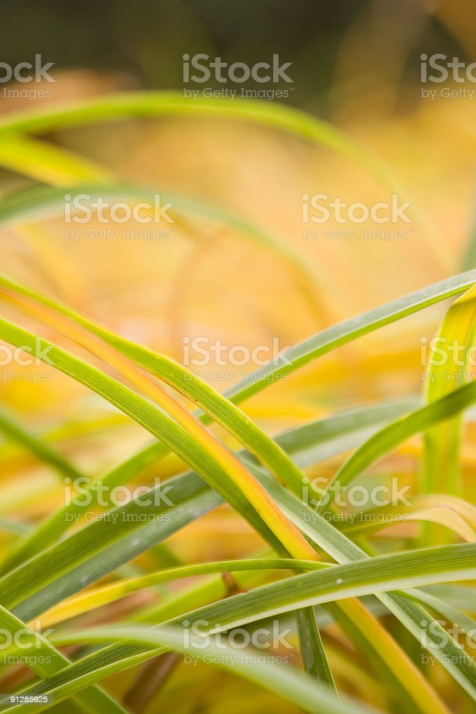 Grass in the autumn stock photo