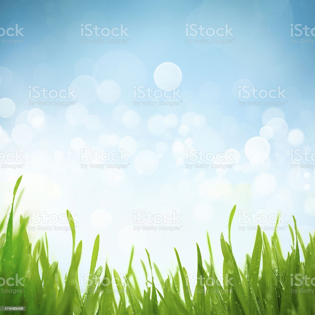 Grass in the morning stock photo