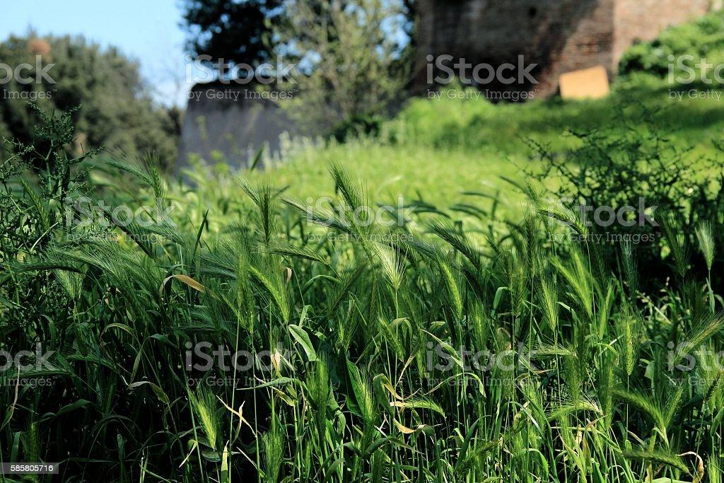 Grass in the sunshine stock photo