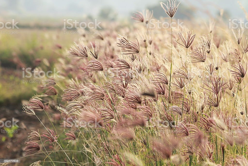 Grass in the wind stock photo