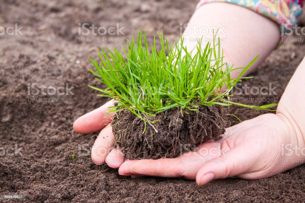grass in woman hands, nature conservation stock photo