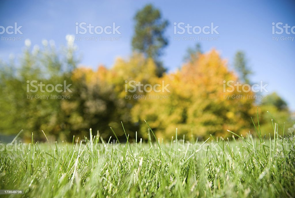 Grass Is Always Greener! royalty-free stock photo