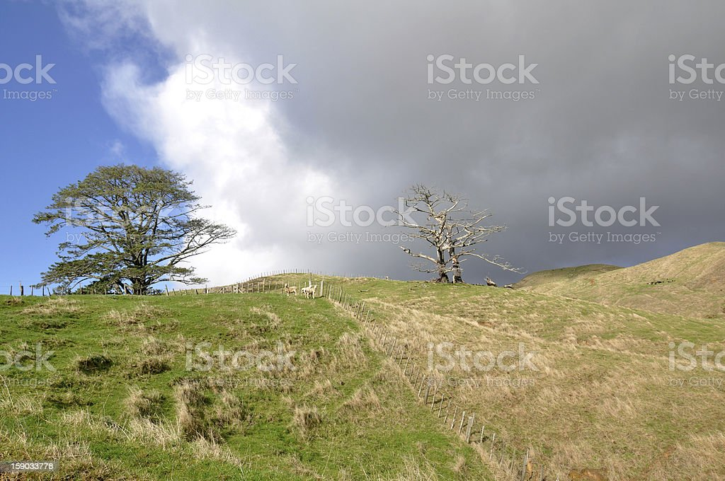 Grass is greener on the other side stock photo