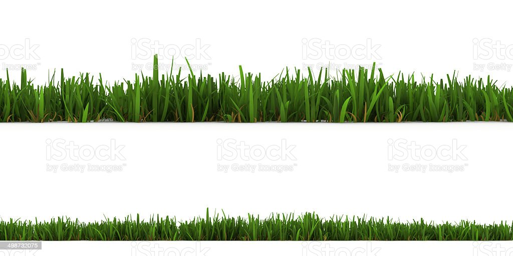 grass isolated on the white background vector art illustration