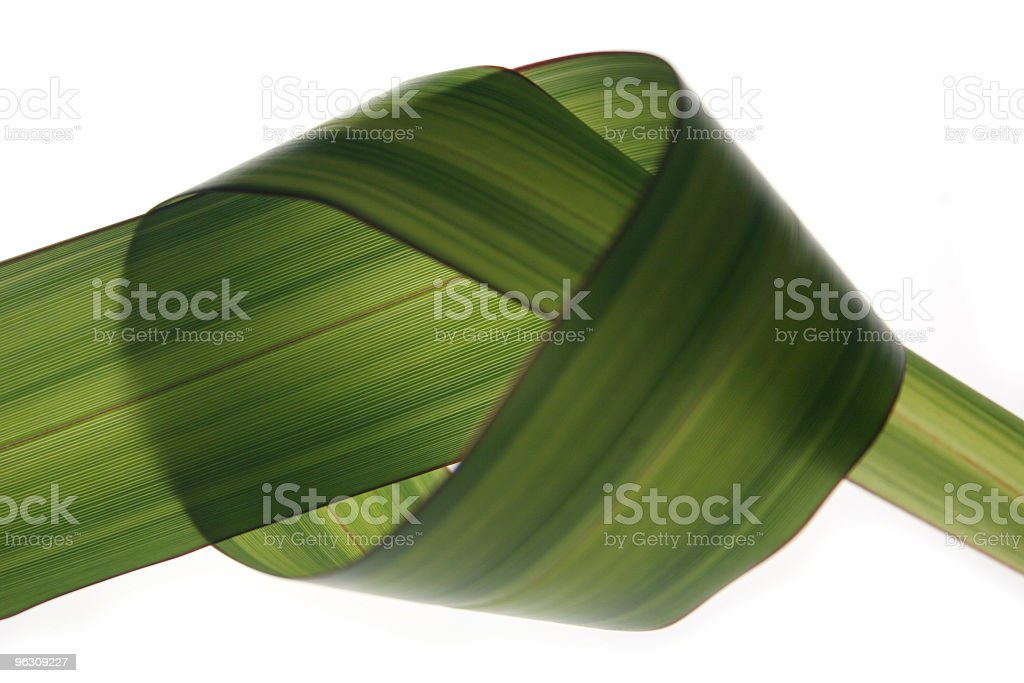grass knot royalty-free stock photo