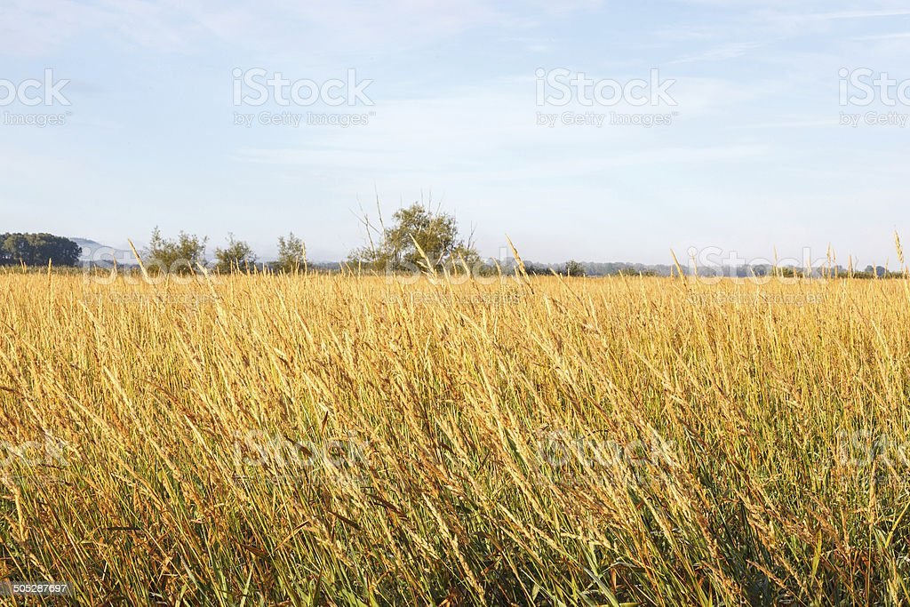 Grass landscape stock photo