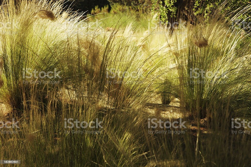 Grass Landscape Sunlight Shadows stock photo