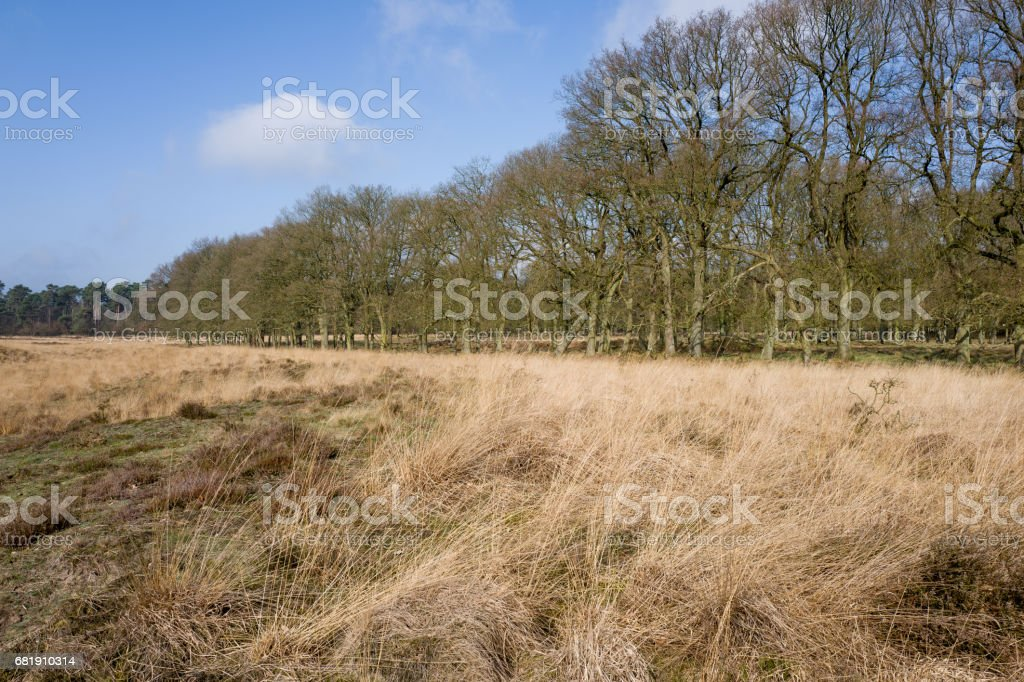 Grass landscape with oak trees. stock photo