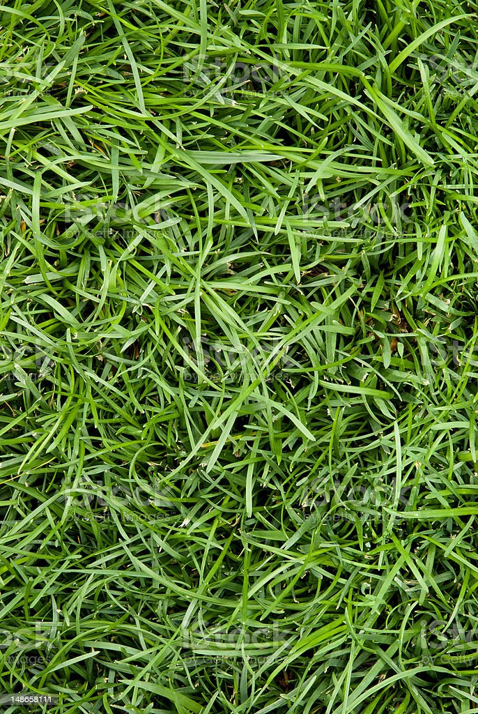 Grass Lawn stock photo