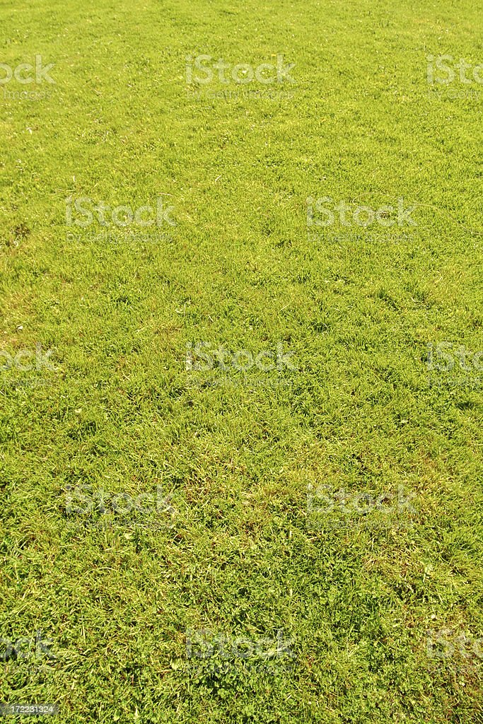 Grass lawn. royalty-free stock photo