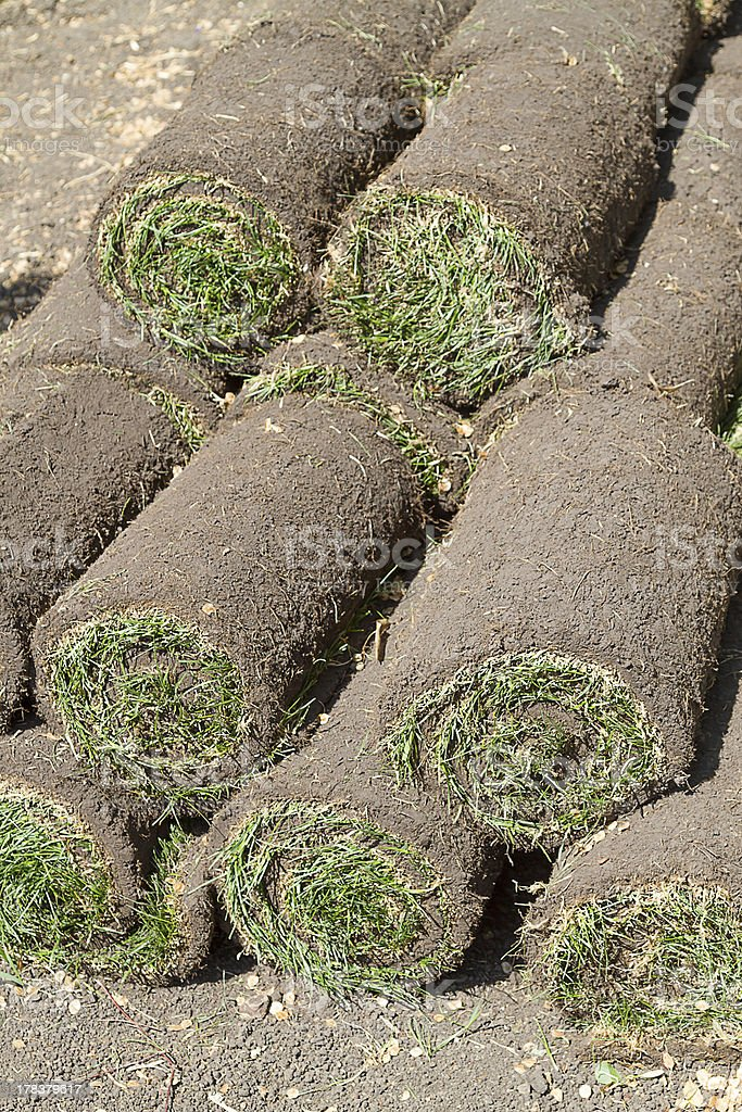 Grass Lawn - Turfs ready to be rolled royalty-free stock photo
