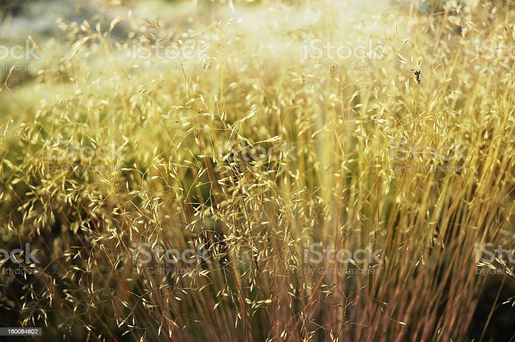 Grass macro shot stock photo