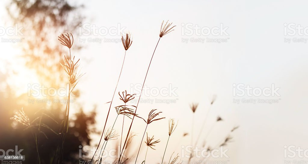 Grass meadow on sunset background stock photo