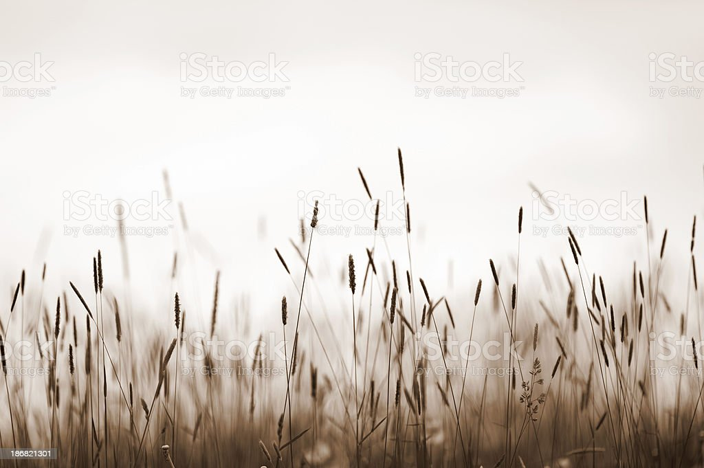 Grass meadow stock photo