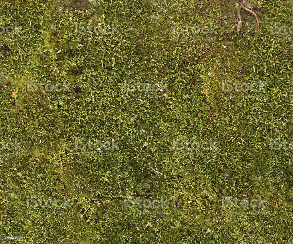 Grass Moss royalty-free stock photo