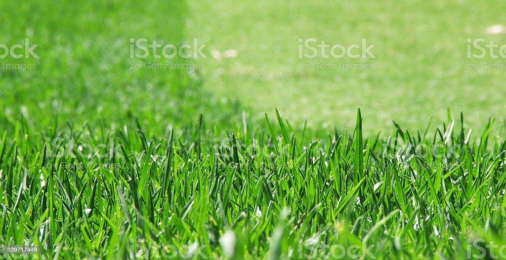 Grass mown royalty-free stock photo