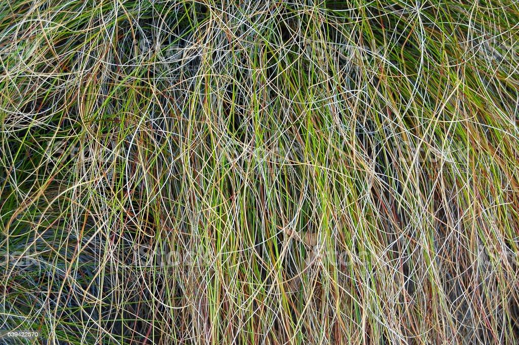 Grass - Mt Buffalo stock photo