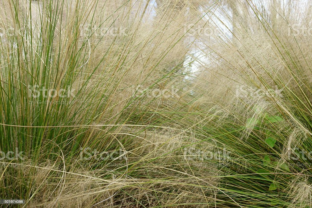 Grass nature background stock photo