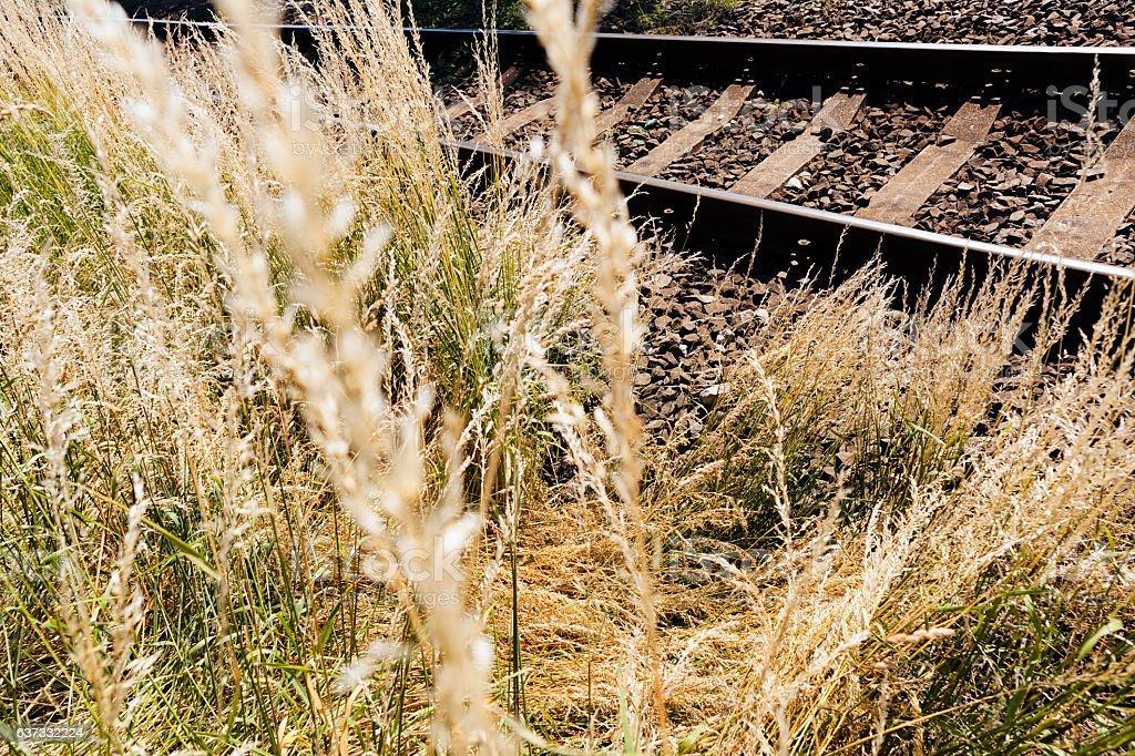 grass near the railroad stock photo