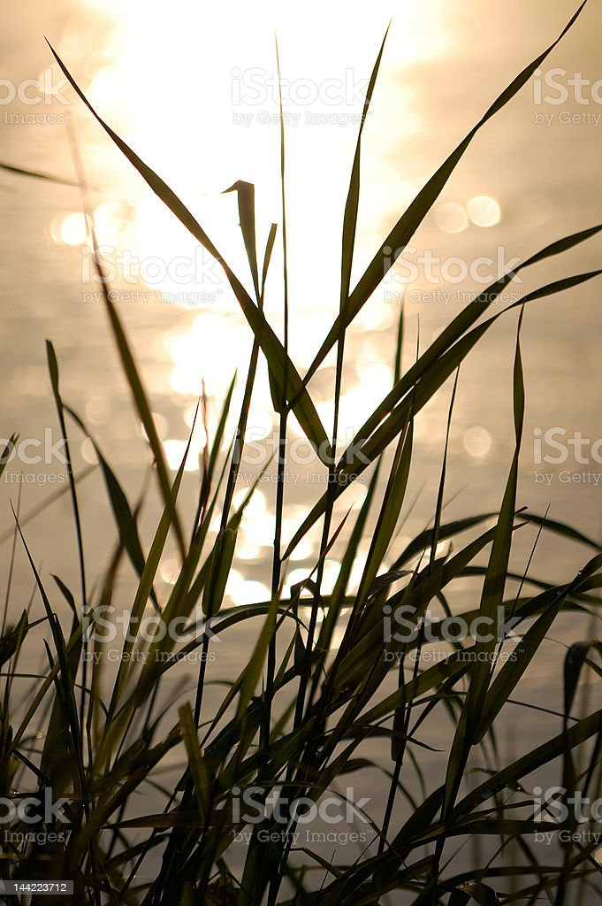 grass near the river royalty-free stock photo