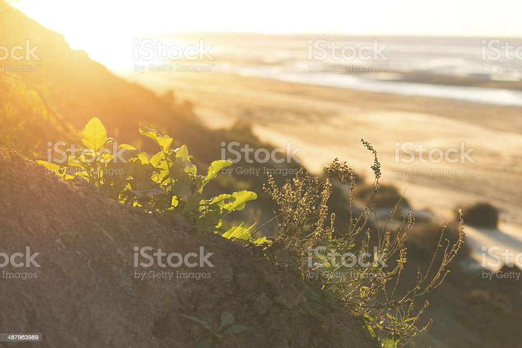 Grass on a rock royalty-free stock photo