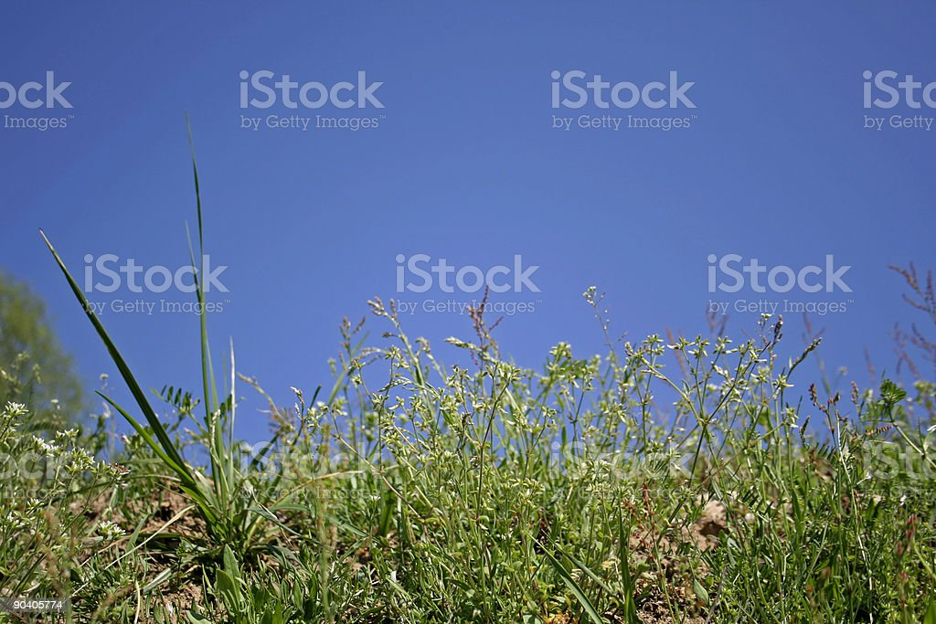 grass on blue sky royalty-free stock photo
