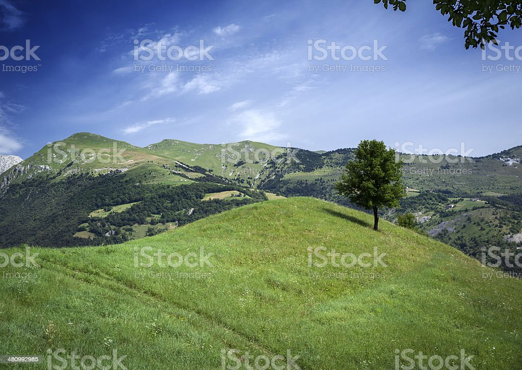 Grass On Hill And Tree royalty-free stock photo