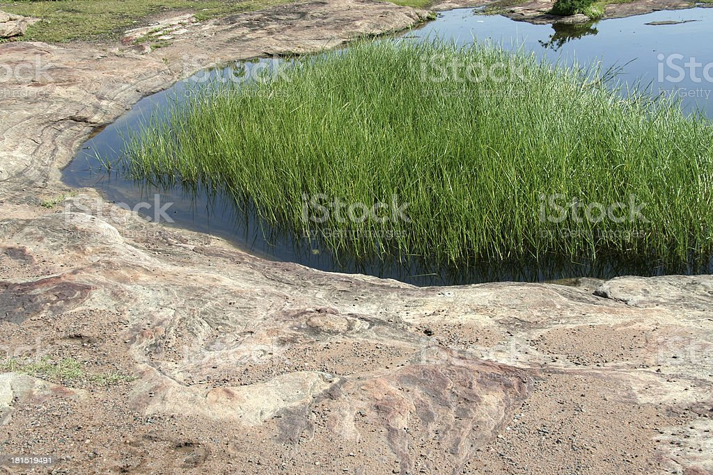 Grass on Rock Bed royalty-free stock photo