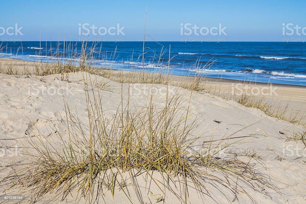Grass on Sandbridge Beach in Virginia Beach, Virginia stock photo