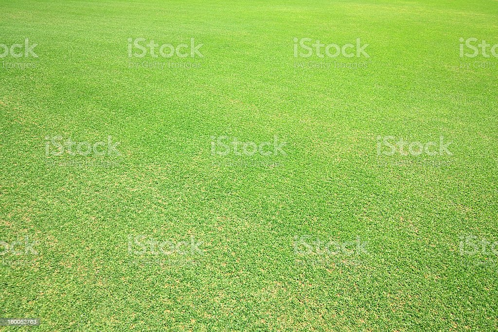 Grass on the field for golf. royalty-free stock photo