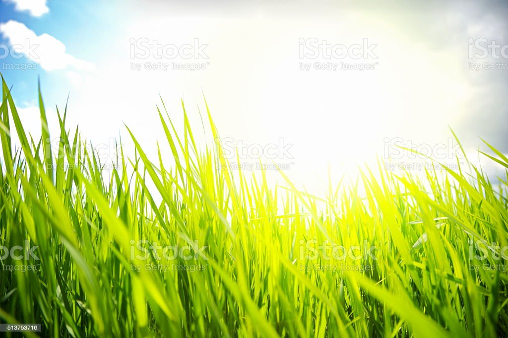 Grass on the Field stock photo