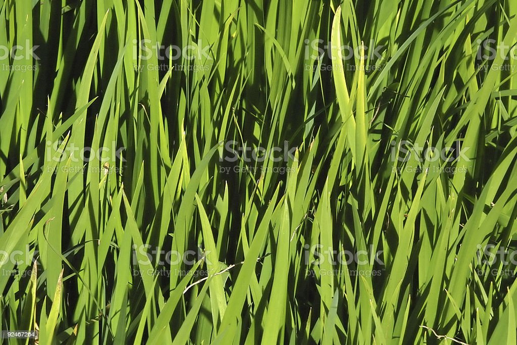 Grass on the field royalty-free stock photo
