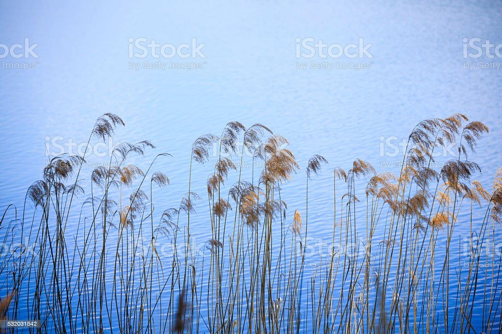 grass on the lakeside stock photo