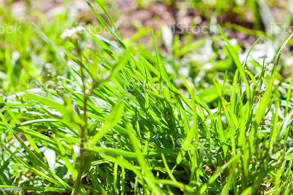 grass on the lawn stock photo