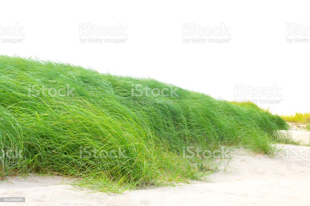Grass on the sand. stock photo