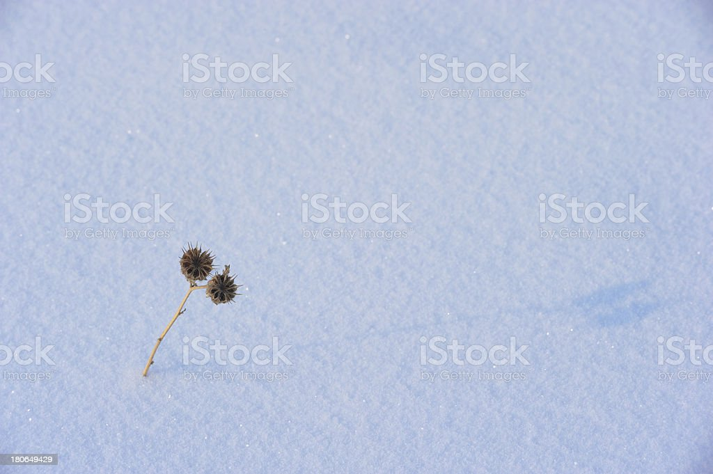 Grass on the snow royalty-free stock photo