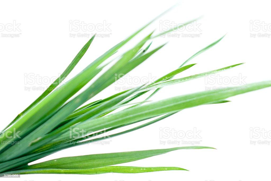 Grass on White royalty-free stock photo