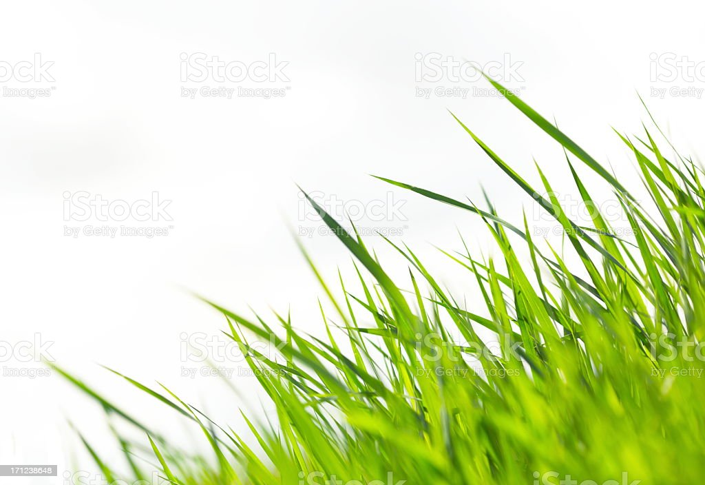 Grass on White XXXL stock photo