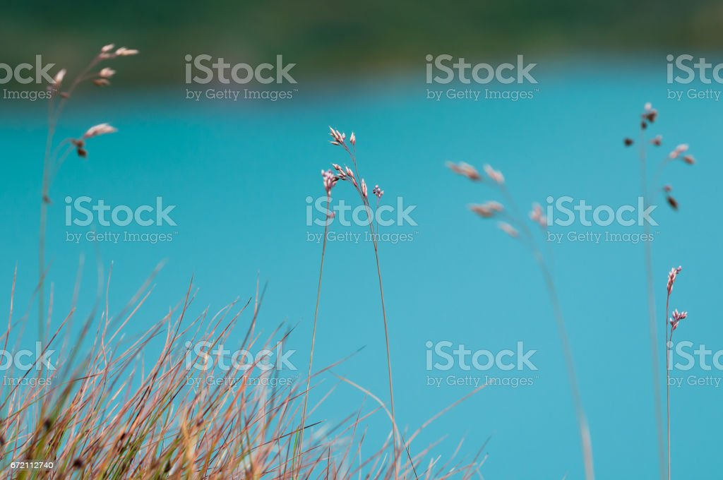 Grass over the lake water stock photo