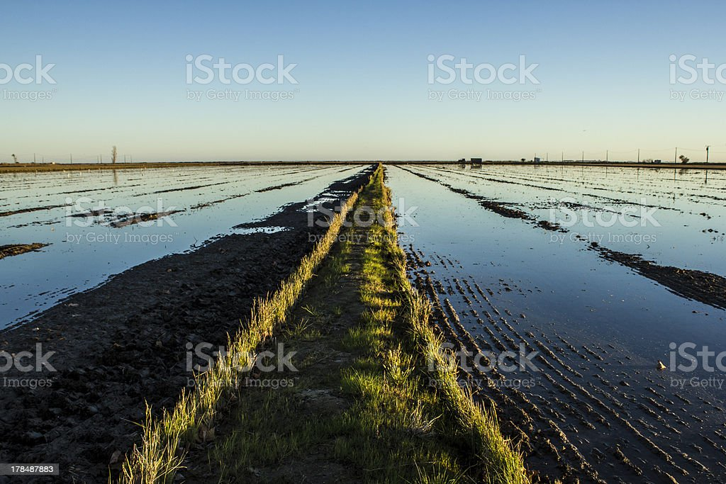 Grass path in the middle of a water surface royalty-free stock photo