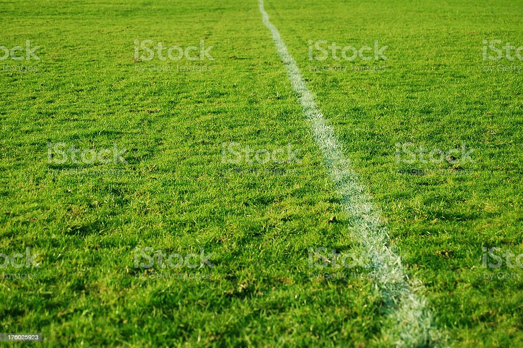 Grass: Perspective royalty-free stock photo