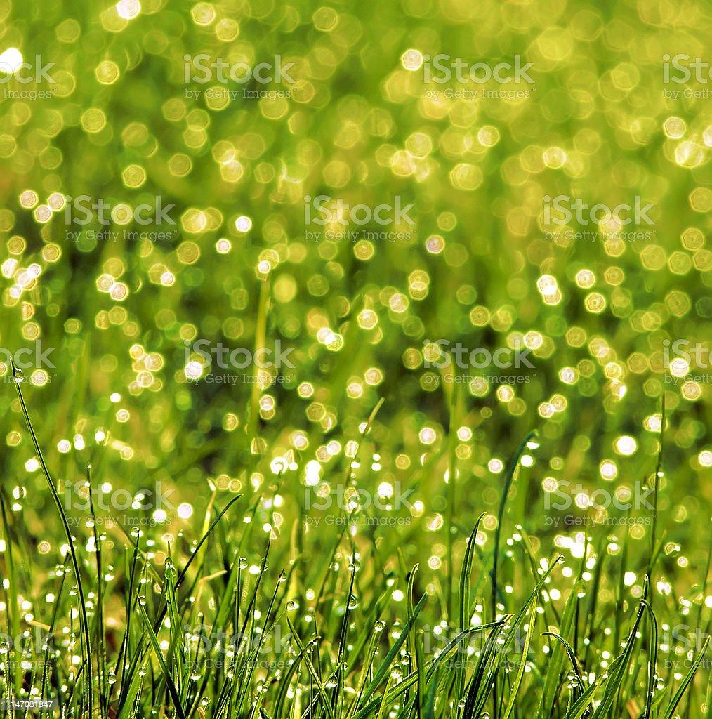 Grass royalty-free stock photo