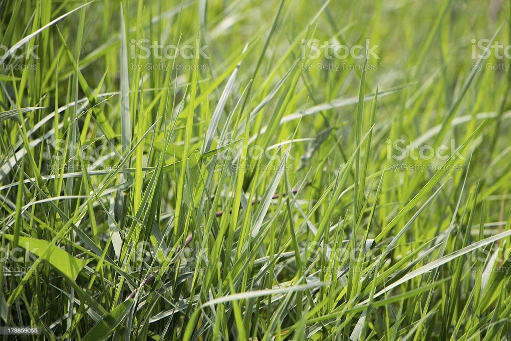 Трава Стоковые фото Стоковая фотография