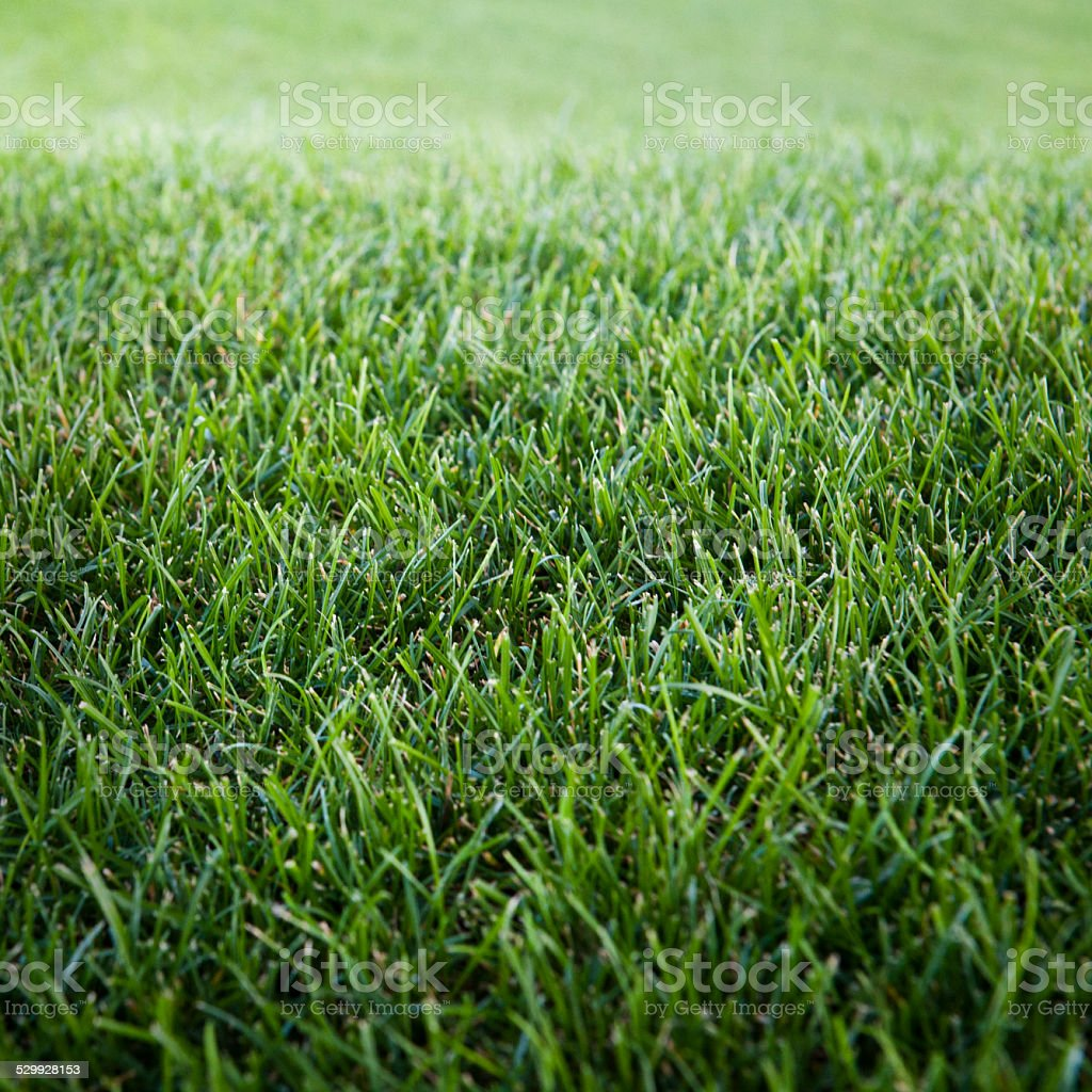 Grass (Click for more) stock photo