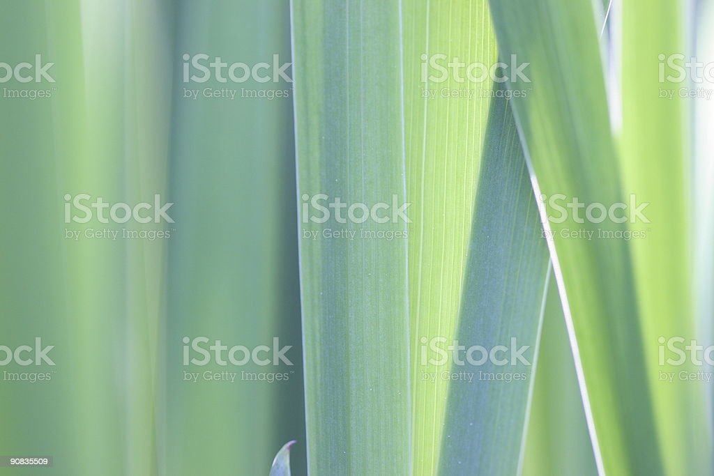 Grass royalty-free stock photo