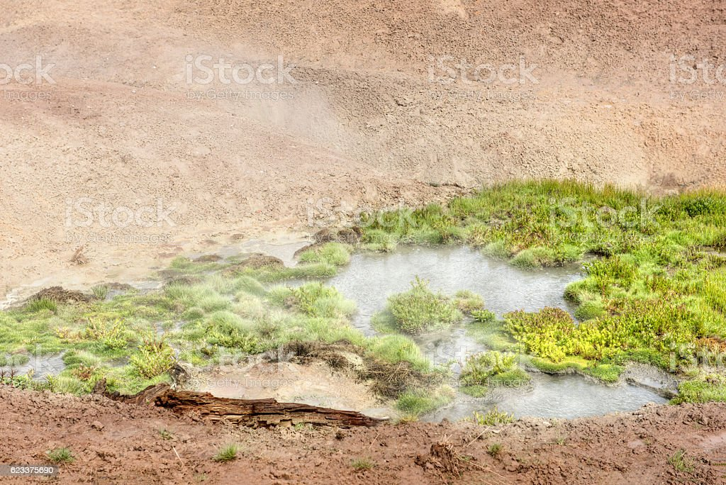 Grass plant growing in boiling water stock photo