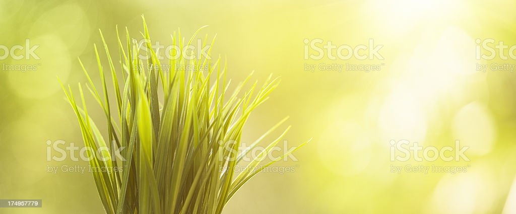 grass plant growing royalty-free stock photo