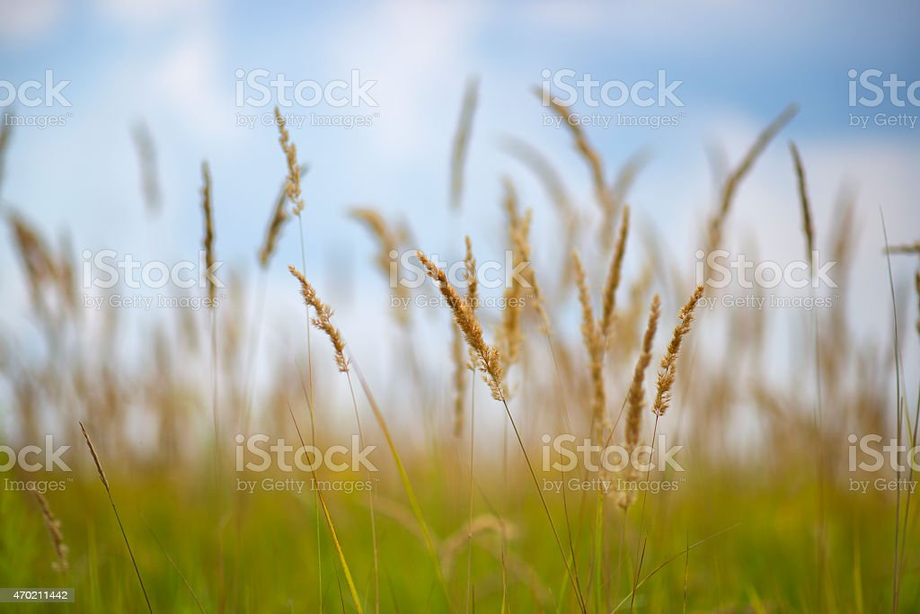 grass prairie stock photo